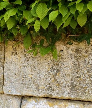 Plants growing on top of a wall